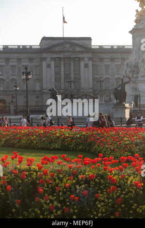 Buckingham Palace at dusk in Spring with bright red flowers for the Commonwealth Heads of Government Meeting in April 2018 - Stock Photo