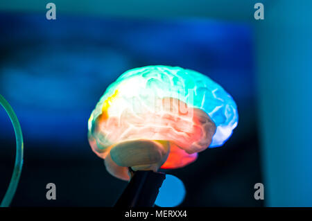 MODEL OF colorful HUMAN BRAIN on blur background - Stock Photo