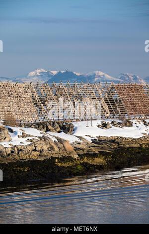 Fsh drying racks; Solvaer Lafoten Norway - Stock Photo