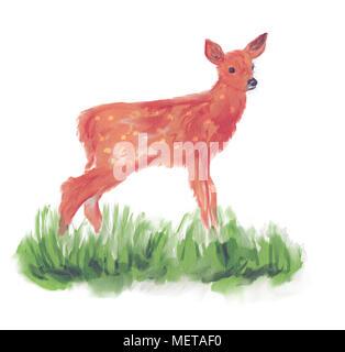 Deer Fawn Drawing