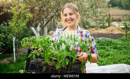 Happy laughing female gardener posing with tomato seedlings at garden - Stock Photo