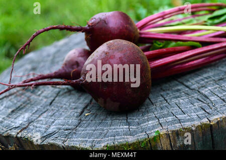 Freshly  beets on an old tree stump. . - Stock Photo