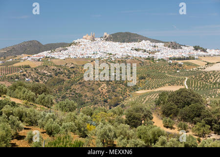 Typical Andalucian landscape with olive groves and white town of Olvera, Cadiz province, Andalucia, Spain, Europe - Stock Photo