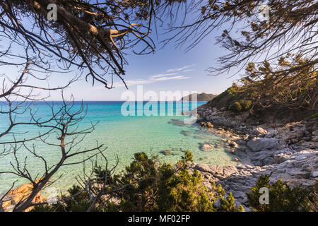 The mediterranean vegetation frames the turquoise sea of Cala Monte Turno Castiadas Cagliari Sardinia Italy Europe - Stock Photo