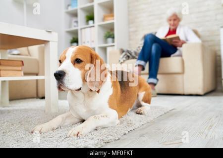 Depressed dog lying on carpet - Stock Photo
