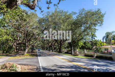 Oak trees along Coral Way, Coral Gable, Miami-Dade County, Florida, USA. - Stock Photo