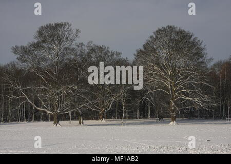 Woodland edge in winter with snow on both the ground and the tree branches all bare of leaves, being a view from a shooter Peg in December - Stock Photo