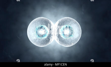3D rendered illustration of the Mitosis and replication of a generic biological Cell. - Stock Photo