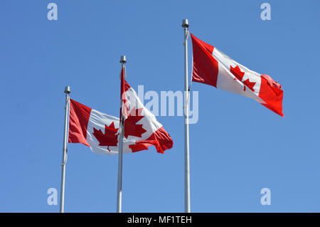 3 Canadian flags flying in a light breeze with ripped edges - Stock Photo