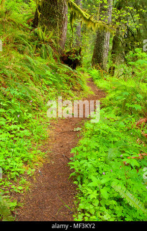 Harris Ranch Trail, Drift Creek Wilderness, Siuslaw National Forest, Oregon - Stock Photo