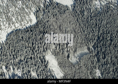 Austria, Salzkammergut, Aerial view of coniferous forest in winter - Stock Photo