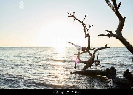 Young woman practicing yoga on a fallen tree in the sea at sunset - Stock Photo