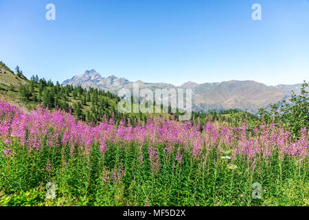 Italy, Piemont, West Alps, landscape and lavender at Strada dei Cannoni - Stock Photo