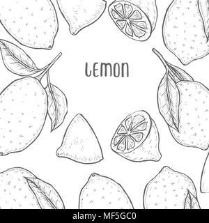 Vector oranges hand drawn sketch. Sketch vector food lemon illustration. Vintage style - Stock Photo