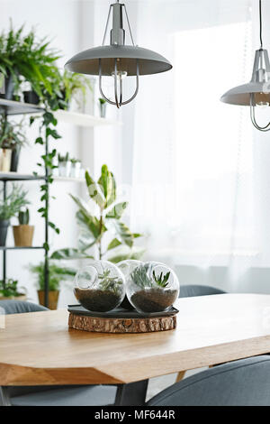 Grey lamps above wooden table with plants in plastic balls in bright dining room interior - Stock Photo