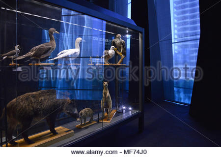 Glass cabinet with animals exhibits displayed at Museu Blau (Museum of Natural Science) in Barcelona Spain Europe. - Stock Photo