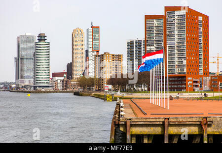 The skyline of Rotterdam, on the Nieuwe Maas, river, Erasmus Bridge, skyscrapers on the 'Kop van Zuid' district, the Netherlands, in the front park in - Stock Photo