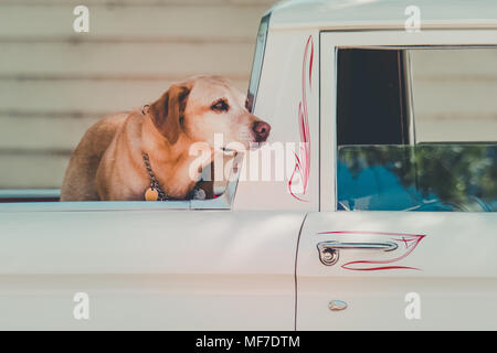 adorable and beautiful images of cute dogs - Stock Photo