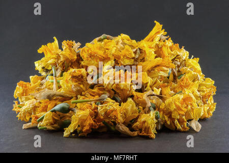 Pile of dead headed daffodils on black background - Stock Photo