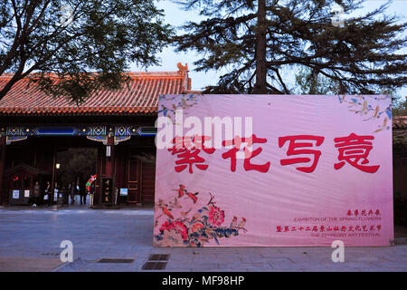 Beijing, Beijing, China. 24th Apr, 2018. Beijing, CHINA-24th April 2018: The Peony Flower Festival is held from April 23rd to the last ten-day period of May in Jingshan Park, Beijing. Jingshan Park is known for its diverse collection of peony.People can enjoy blooming peony flowers during night in Jingshan Park. Credit: SIPA Asia/ZUMA Wire/Alamy Live News - Stock Photo