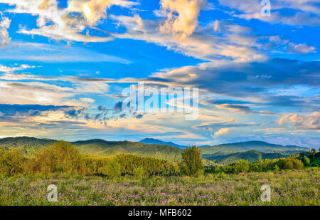 Picturesque summer evening landscape with golden sunset clouds in the sky over the flowering mountain meadow with purple wild flowers - Altai mountain - Stock Photo
