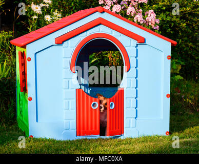 Sad dog inside kid playground toy house at garden - Stock Photo