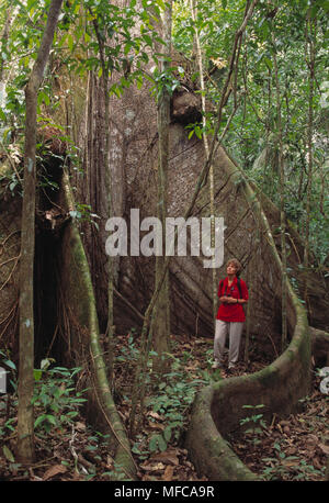 KAPOK TREE or SILK COTTON TREE  Ceiba sp. Woman standing by giant buttress roots.  Cano Negro Area, Costa Rica. - Stock Photo