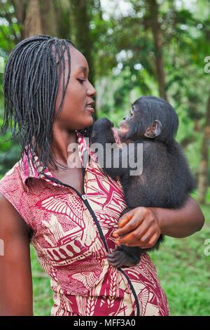 Bonobo/Pygmy chimpanzee (Pan paniscus) orphaned baby with surrogate mother, Sanctuary Lola Ya Bonobo Chimpanzee, Democratic Republic of the Congo. Cap - Stock Photo