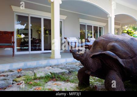 Giant tortoise (Geochelone gigantea). Vulnerable species. Seychelles Cousin Island. Dist. Seychelles islands.(Property released) - Stock Photo