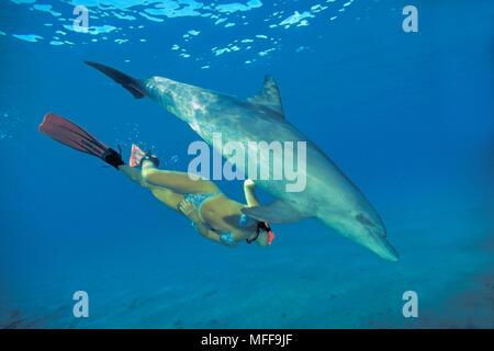 Grosser Tuemmler (Tursiops truncatus) und Schnorchlerin, Marsa Alam, Aegypten | Bottlenose dolphin (Tursiops truncatus), snorkeler, Marsa Alam, Egypt - Stock Photo