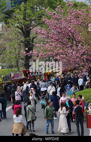 Crowds at the Sensoji Temple in Tokyo, Japan, come to view a festival and the blooming cherry and plum trees in early April; it's very colorful scene. - Stock Photo