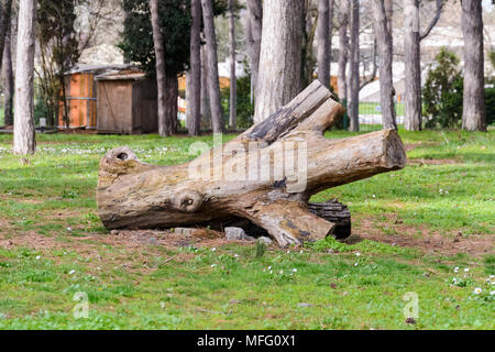 Piece of wood in a park, dead stump on the side - Stock Photo