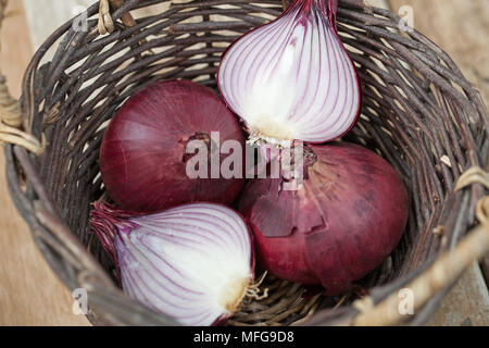 A basket with two whole and two half red onions - Stock Photo