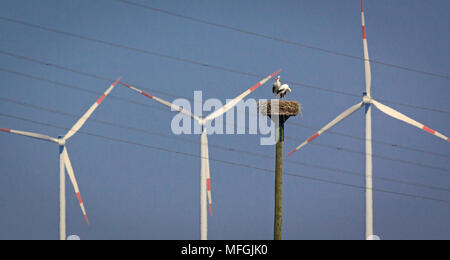 White Stork (Ciconia ciconia), Fam. Ciconiidae, Wind turbines in background, Karben, Hessen, Germany - Stock Photo