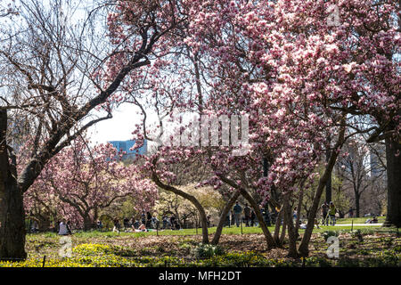 Central Park in Springtime, NYC, USA - Stock Photo