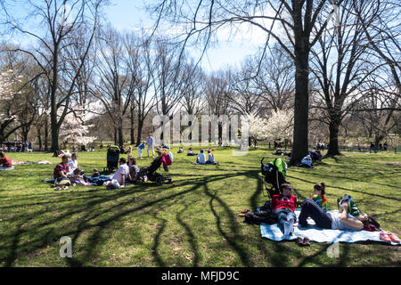 People Enjoy Picnics on the Great Lawn in Central Park during Springtime, NYC, USA - Stock Photo