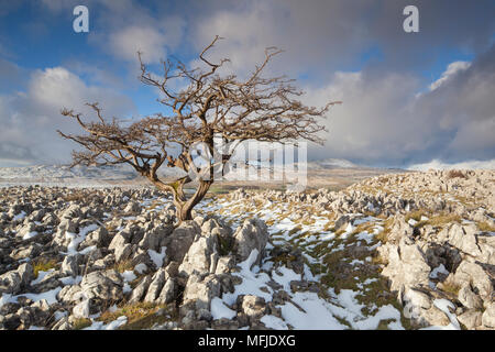 View to Whernside Hill from Limestone pavement at Ravens Scar above Southerscales Nature Reserve, Yorkshire Dales, North Yorkshire, England, UK - Stock Photo
