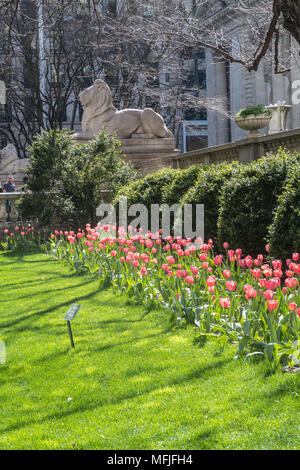 Springtime in front of the New York Public Library on Fifth Avenue, NYC, USA - Stock Photo