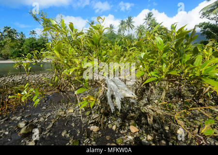 Piece of plastic caught in the branches of a mangrove forest in the Wet Tropics, Far North Queensland, Australia - Stock Photo