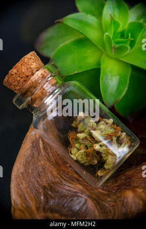 Detail of jar with cannabis calyxes (sour tangie strain) isolated on black background - Medical marijuana dispensary concept - Stock Photo