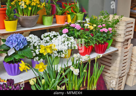 Spring flowers - narcissus and tulips in pots are on sale in the street of April solar city. Sunny day outdoor shot - Stock Photo