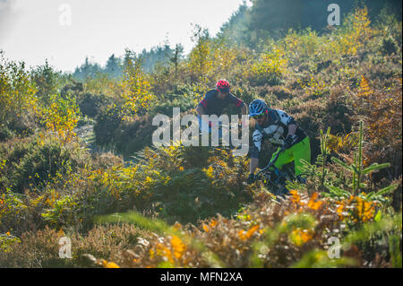 Mountain bikers ride a trail at Haldon Forest near Exeter in Devon. - Stock Photo