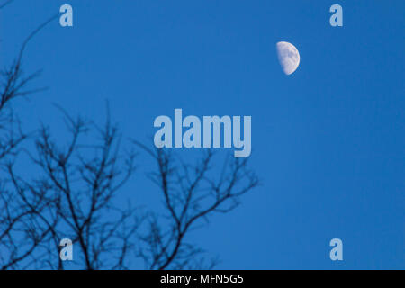 Moon in the blue sky through the branches - Stock Photo