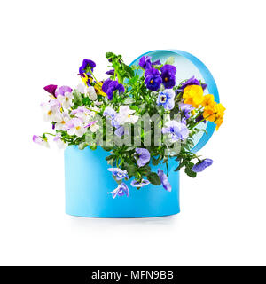 Blue gift box with pansy flowers isolated on white background clipping path included. Spring garden viola tricolor as holiday present and mothers day  - Stock Photo