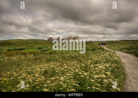 Field of flowers with footpath leading to Skaill House, a mansion at the westside of Mainland, Orkney, near Neolithic village of Skara Brae. - Stock Photo
