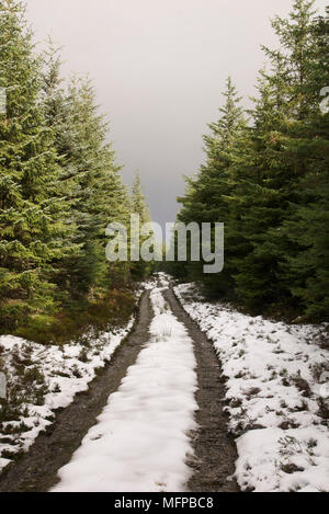 Path between dense conifers in Balloch Wood near Keith. - Stock Photo