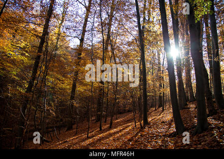 Lovely autumn forest landscape with sunbeams, Belgian countryside - Stock Photo