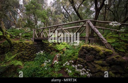 Footpath with wooden bridge in cloud forest, laurel forest, Raya la Llania, El Hierro, Canary Islands, Spain Stock Photo