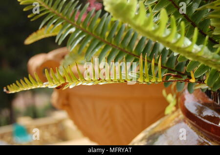 Long- leaf plant with a clay flower pot - Stock Photo