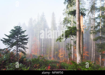 Beautiful morning in the misty autumn forest with majestic colored trees - Stock Photo